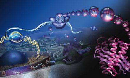 दवाओं को निर्देशित करने वाले प्रोटीन की खोज
