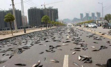 मानसून के दौरान 100 सालों से होती है यहां मछलियों की बारिश