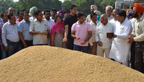 दाना मंडी में सरकारी धान की खरीद शुरु, विधायक अरोड़ा ने किया शुभारंभ