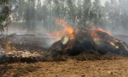 नाड़ को लगी आग से 2 एकड़ गेहूं राख