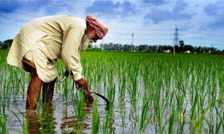 किसान कर्ज माफी की दूसरी किश्त जारी, कैप्टन बाेले पानी बचाअाे नहीं ताे रेगिस्तान बन जाएगा पंजाब