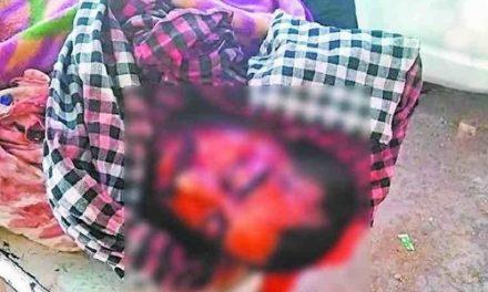 पंचकूलाः दो सांडों की लड़ाई में गई शख्स की जान, सींगों से उठाया दीवार पर दे मारा