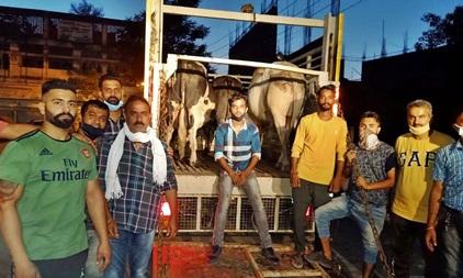 शहर को लावारिस पशुओं की समस्या से मुक्त करने उपरांत करेंगे गांवों का रुख: अश्विनी गैंद